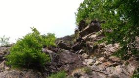 自然,在高山山的一个美好的山森林风景 在峭壁生长灌木,树 夏天 股票视频