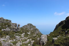 自然,植物,灌木,在桌山国家公园,开普敦南非旅行顶部的岩石 免版税库存图片