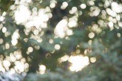 自然,绿色b自然,被弄脏的光抽象背景  库存照片