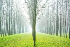 自然,风景,美丽的分开, 免版税库存照片