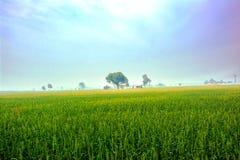 自然,风景 免版税库存图片