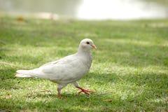 自然,鸟,绿色 库存照片