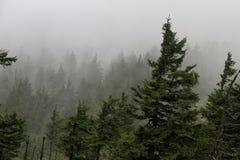 自然:刮风的天气的山森林 免版税图库摄影