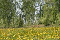 自然 乌法 乌法地区 Shamonino村庄  免版税库存照片