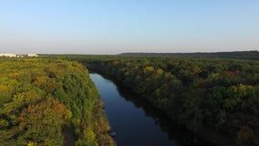 自然 在树中的河轮 在视图之上 股票视频