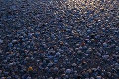 自然贝壳纹理 免版税库存图片