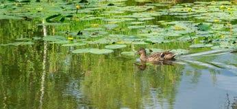 自然 夏天 免版税图库摄影