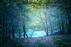 自然 黑暗的森林 库存图片