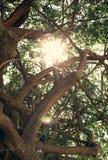自然晴朗的背景 垂直 免版税库存照片