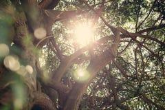 自然晴朗的绿色背景 免版税库存照片