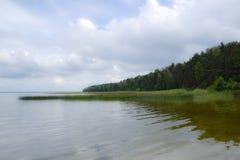 自然 森林 免版税库存图片
