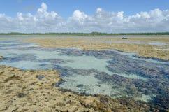 自然水池在巴西 免版税图库摄影