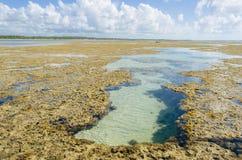 自然水池在巴西 库存图片