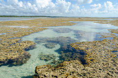 自然水池在巴西 免版税库存图片