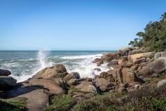 自然水池落后在Lagoa da康塞桑-弗洛里亚诺波利斯,圣卡塔琳娜州,巴西巴拉岛da Lagoa地区  免版税库存图片