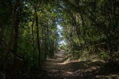自然水池道路落后Lagoa da康塞桑-弗洛里亚诺波利斯,圣卡塔琳娜州,巴西ar巴拉岛da Lagoa地区  库存图片