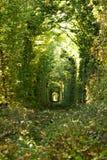 自然-爱、绿色树和铁路,乌克兰真正的隧道奇迹  图库摄影