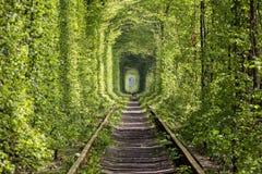 自然-爱隧道奇迹  乌克兰 免版税库存照片
