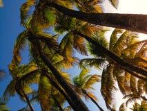 自然轻的树手段椰子植物天空旅行旅游业波多黎各 库存照片