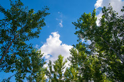 自然 美丽的天空通过树 库存图片