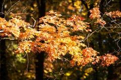 自然 美好的秋天颜色在宫殿庭院里 免版税图库摄影