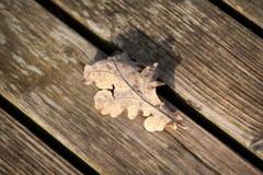 自然 美好的秋天颜色在宫殿庭院里 免版税库存图片