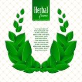自然绿色叶子草本eco花圈  库存图片