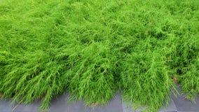 自然绿色地毯背景 库存照片