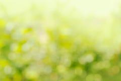 自然绿色明亮的迷离背景 免版税库存图片