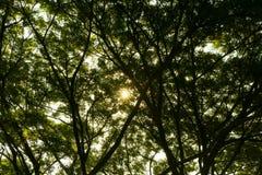 自然绿色木阳光 库存图片
