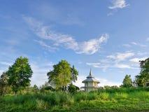 自然绿色树和草与蓝天 免版税库存照片