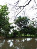 自然绿色树水河空气 免版税图库摄影