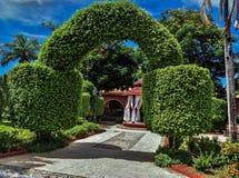 自然绿色植物装饰弧 免版税库存图片