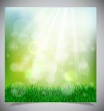 自然绿色背景 库存照片