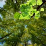 自然绿色背景03 免版税库存照片