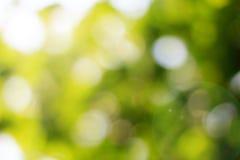 自然绿色被弄脏的和bokeh背景,抽象背景 库存照片