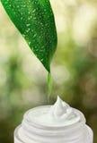 自然绿色被弄脏的背景。 免版税库存图片