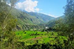 自然绿色风景背景在喜马偕尔邦,印度 免版税库存照片