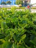 自然绿色 图库摄影