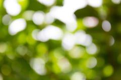 自然绿色Bokeh背景,抽象背景 免版税库存照片
