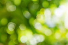 自然绿色Bokeh背景,抽象背景 免版税库存图片