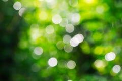 自然绿色bokeh背景 免版税库存照片