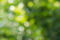 自然绿色bokeh背景 免版税库存图片