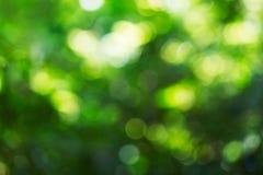 自然绿色bokeh背景 库存图片