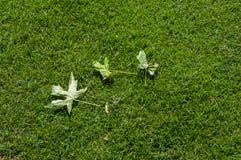 自然 草甸 免版税库存照片