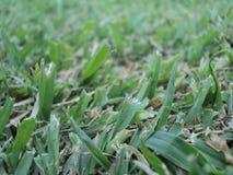 自然绿草背景 免版税库存照片