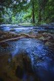 自然水蒸汽长的曝光摄影在深森林里 免版税库存照片