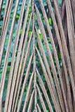 自然结辨的干棕榈叶 库存照片