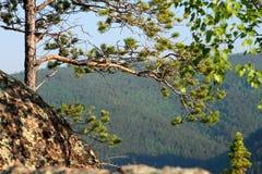 自然 预留 自然 西伯利亚 库存照片