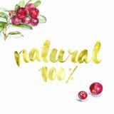自然 向量例证